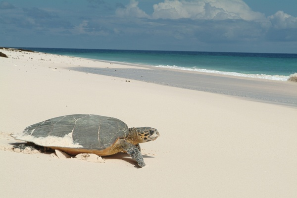 Check this guy out! Taken at the Seychelles.