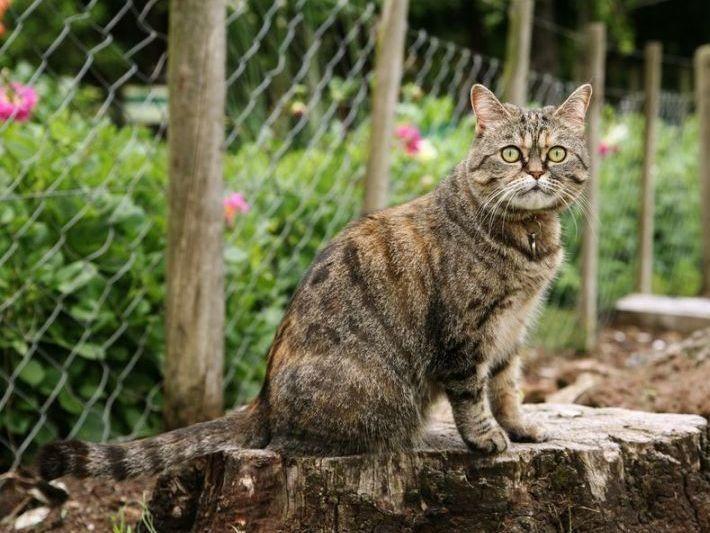 Katze Aus Dem Garten Verscheuchen Harmlose Hausmittel In 2020 Katzen Katzenhaltung Tiere