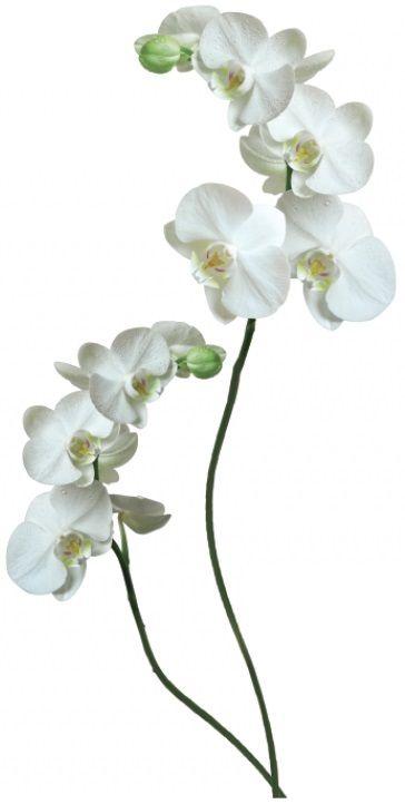 Vinilo decorativo White Orchid. ¿No tienes idea para una decoración de la pared que no va a ser demasiado costosa, pero te ayuda a refrescar el interior de tu habitación? ¡Este vinilo decorativo es ideal! Además se pone muy facil en la pared ツ