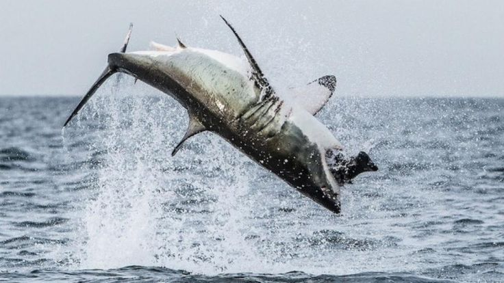 Flying #sharks in #CapeTown! We're not making this up...