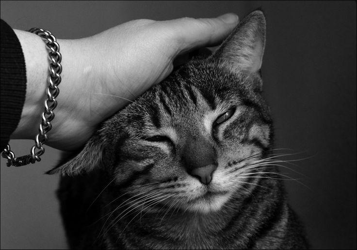 Hausapotheke für Katzen