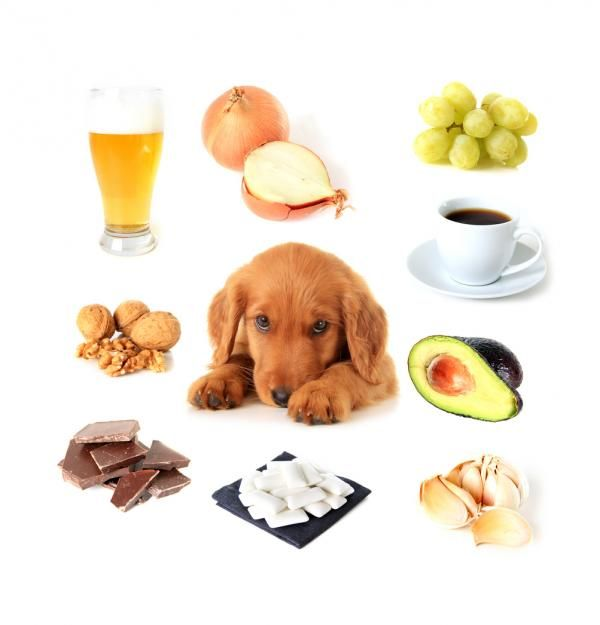 10 alimentos prohibidos para perros - ExpertoAnimal
