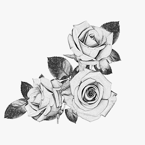 Black Rose Designs | Rose; black and white; sketch; psd layered material