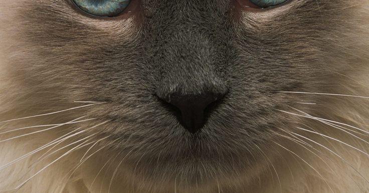 Como treinar um gato para usar o vaso sanitário no banheiro. Os gatos são criaturas inteligentes que você pode treinar para fazer muitas coisas, inclusive usar o vaso sanitário. Junto com a inteligência está o desejo por limpeza, que é o motivo pelo qual eles cobrem seus detritos com areia depois de usar a caixa — eles não querem que fique com mau cheiro. Embora treinar seu gato para usar o vaso sanitário ...