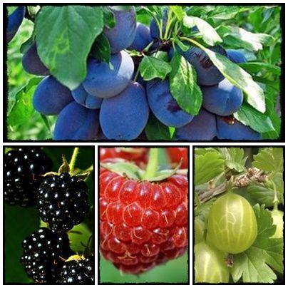 Spokojny Dom - blog o rodzinie, roslinach i moich wartościach.: Jakie rośliny przyciągną motyle do naszego ogrodu? Jak wzbogacić naszą faunę w ogrodzie.  blueberrys, seeds, garden, vege