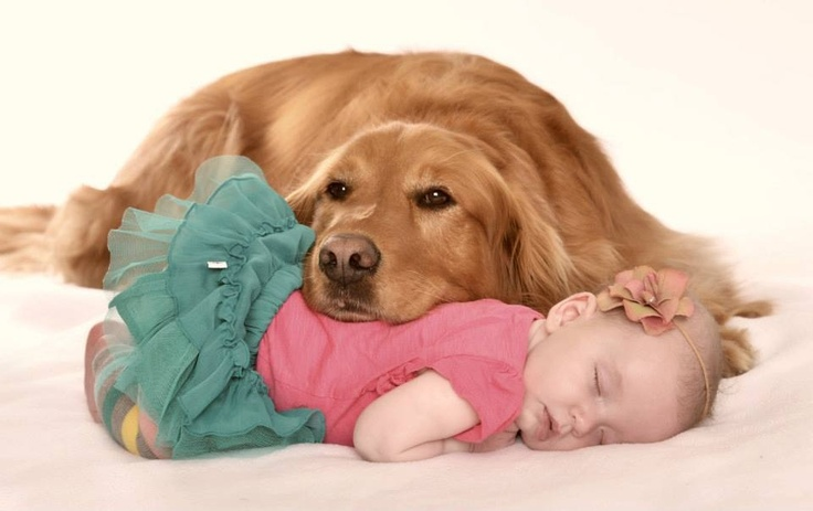 Dog and baby photo, golden retriever and newborn, photography ideas