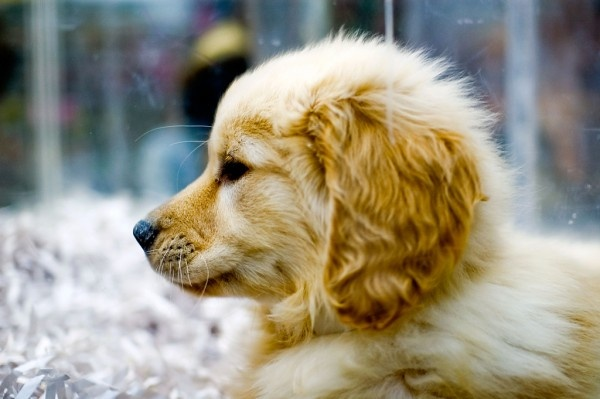 From puppy mill to pet shop: LA City Council seeks to ban retail pet sales