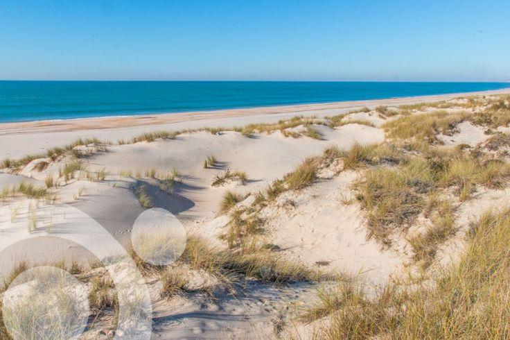 Doñana beach. More information to plan your trip to #Doñana in www.qnatur.com