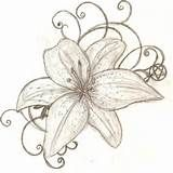Tiger Lily Flower Drawing Images