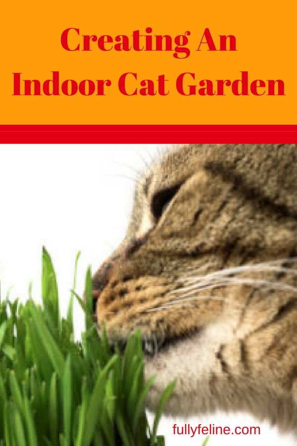 681 best life with a cat images on pinterest for Indoor gardening with cats