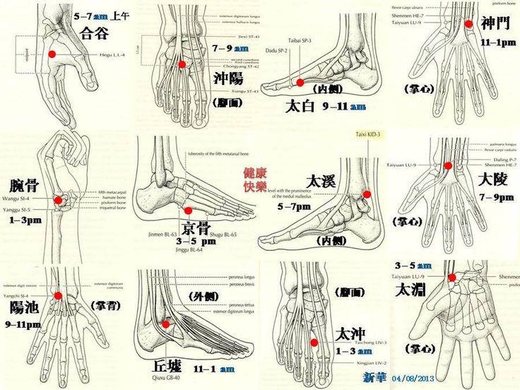 Los puntos Yuan y los puntos Luo. Los puntos Yuan (Fuente) son aquellos por donde pasa y se retiene la energía de los meridianos de los...