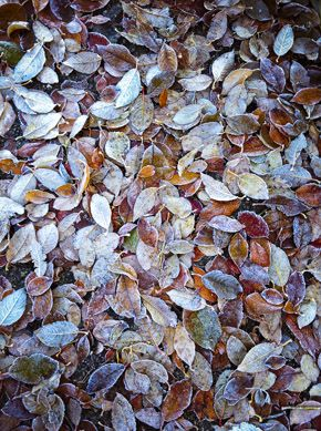 tapis de #feuilles d' #automne