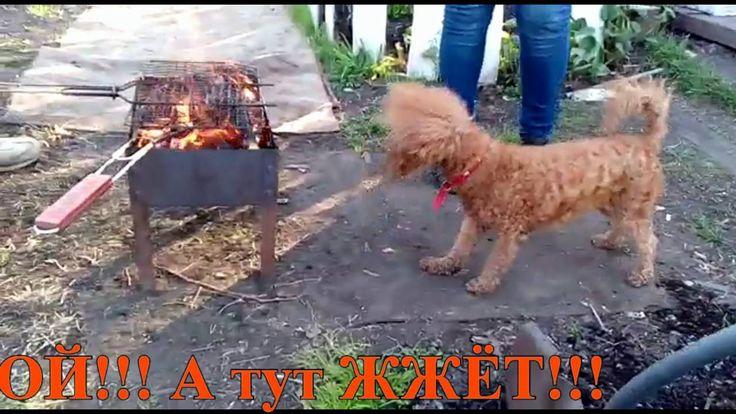 ИРИСКА Presents! СОБАКА. Ириска на шашлыках. Собака Отдыхает.