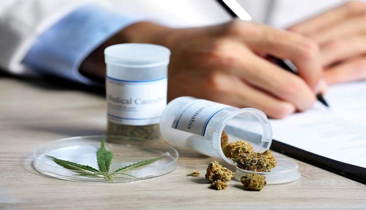 Del Narcotráfico a la Biotecnología: El Negocio de la Marihuana Medicinal en Colombia