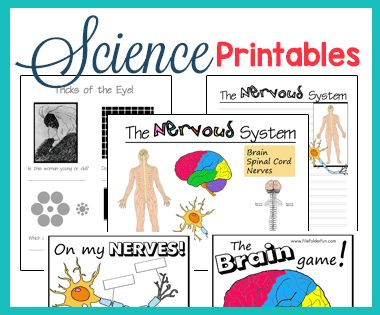 Free Homeschool Science Printables for Kids!  Great for Notebooking and Unit Studies
