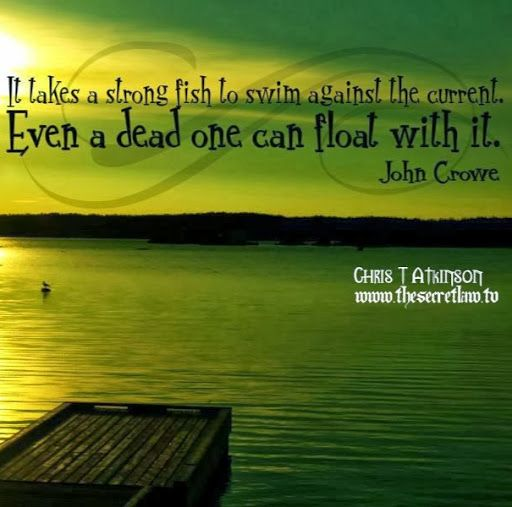 Fish Motivational Quotes: 551 Best Images About Inspirational Quotes On Pinterest