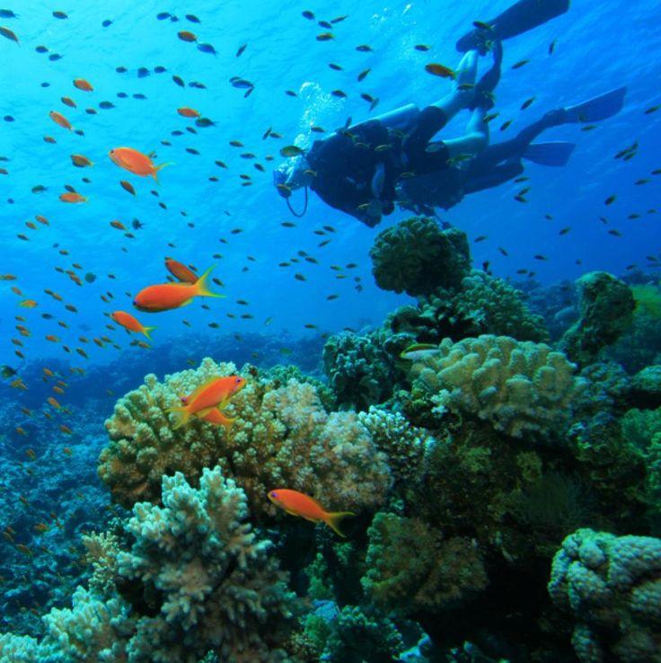 Calvi et ses superbes fonds marins