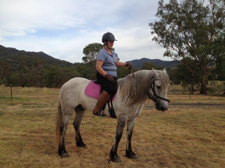 Wallace my Highland Pony