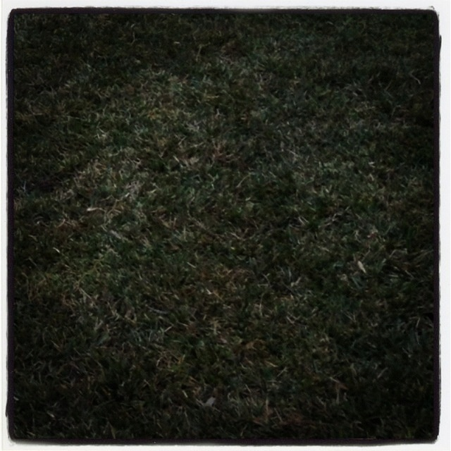 Day 12 - Texture. #photoadayjuly