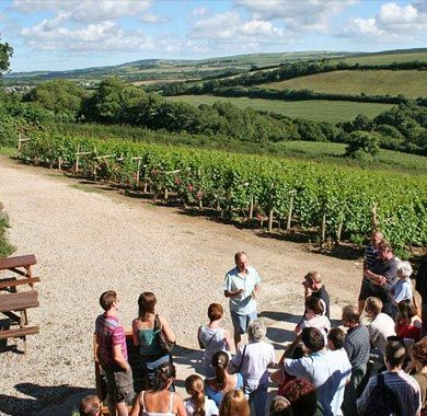 Camel Valley, Cornwall, tour