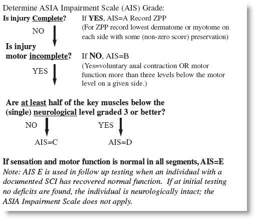 American Spinal Injury Association-ASIA Scale (how to grade a spinal cord injury)