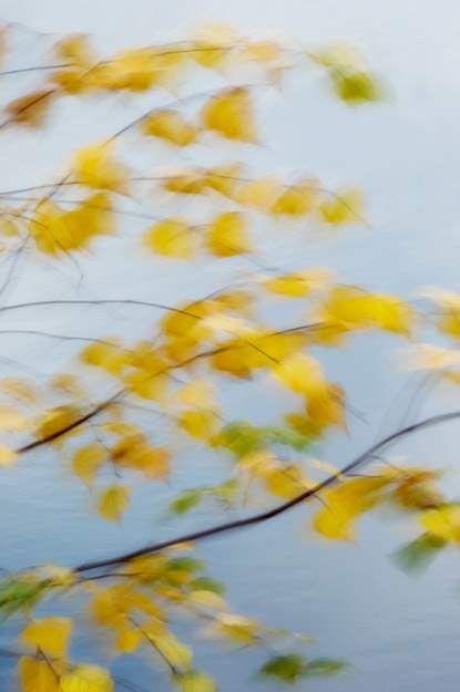 fall yellow 173V