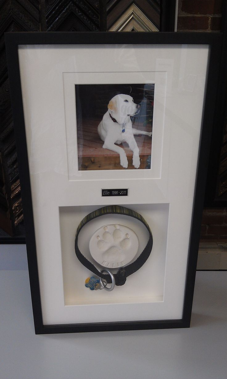 Shadow box as a pet remembrance. Think I'll do this for my boy.