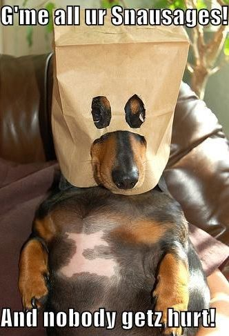 12 Reasons Dachshunds Are The Worst Breed EVER