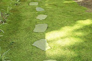 Best 25 moss lawn ideas on pinterest ground cover for Low maintenance ground cover ideas