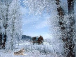 wolf screensavers animated | Nature Screensavers Letter W Page 22