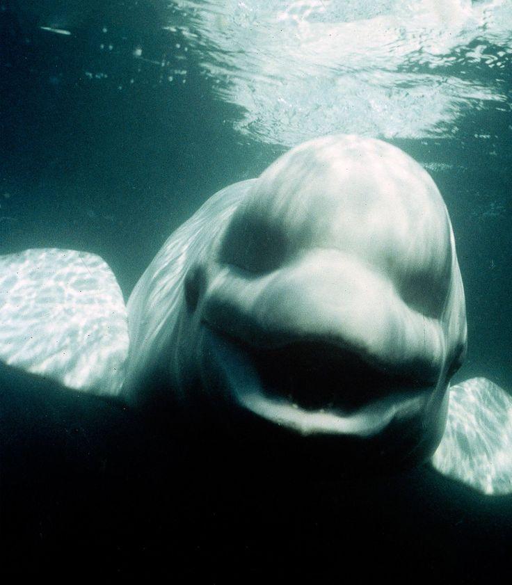 belugawhale - Google 검색