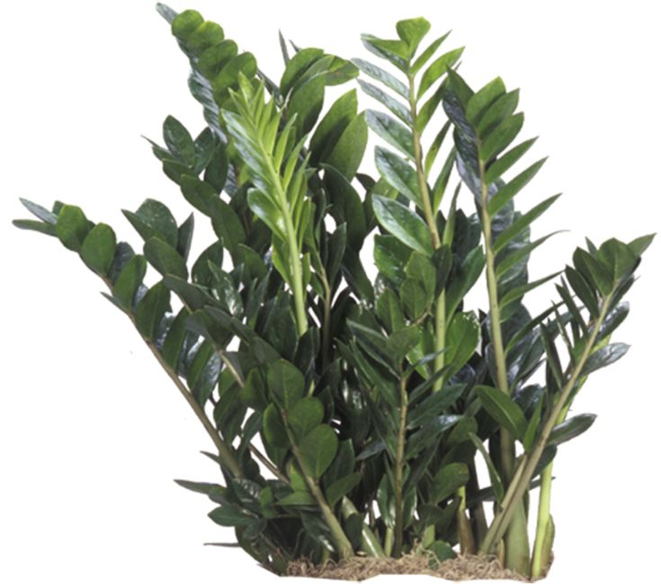 Tropical House Plants Plants Indoor Plants U0026 House Plants In Boston Ma  Evergreen
