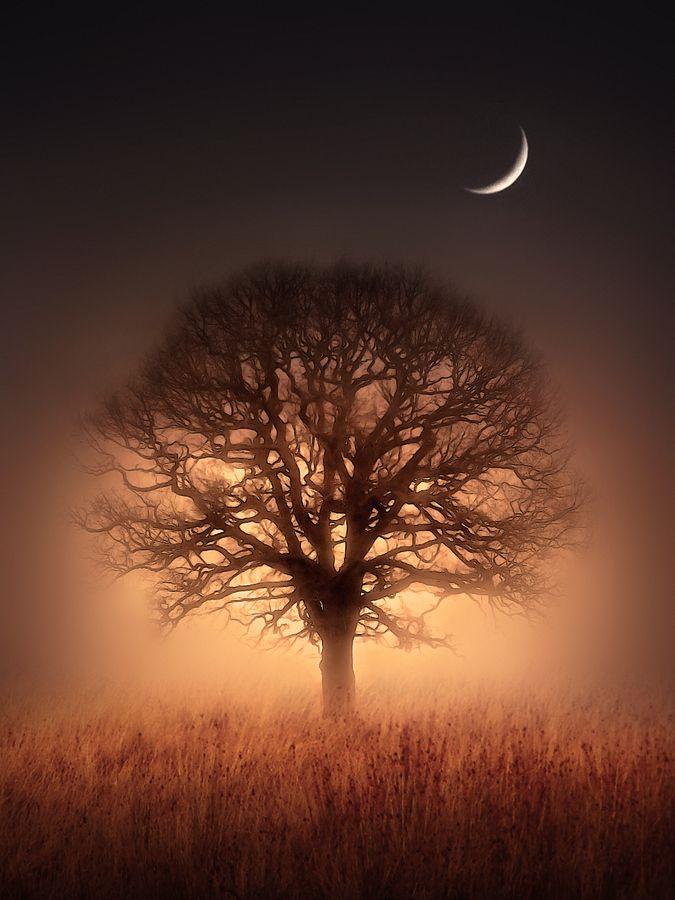 Arbol y luna