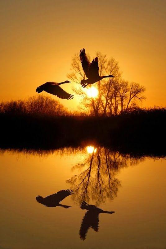 Flying Geese over Lake, Slotepark, Amsterdam, The Netherlands
