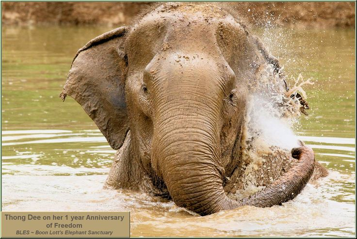 Thank you BLES ~ Boon Lott's Elephant Sanctuary for all the work you do for these sweet giants.