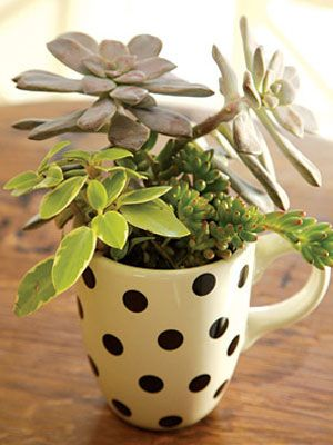 Make a super mini-garden in a teacup.   21 Ways To Build A Miniature Garden With Items Found In Your House