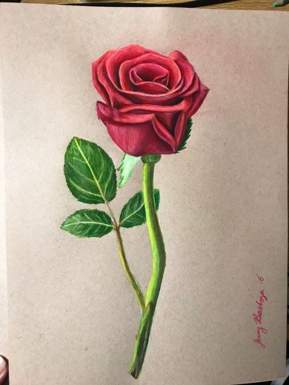 Original Rose Drawing Flower Art Rose Art Valentines Gift Etsy Flower Drawing Flower Art Rose Drawing