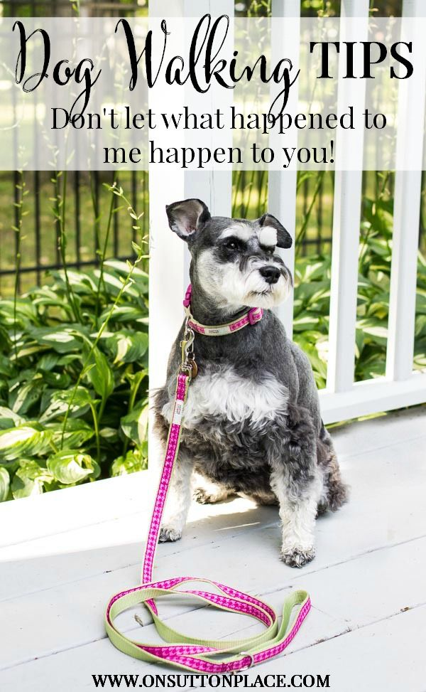 How to Walk Your Dog Safely | Tips from On Sutton Place