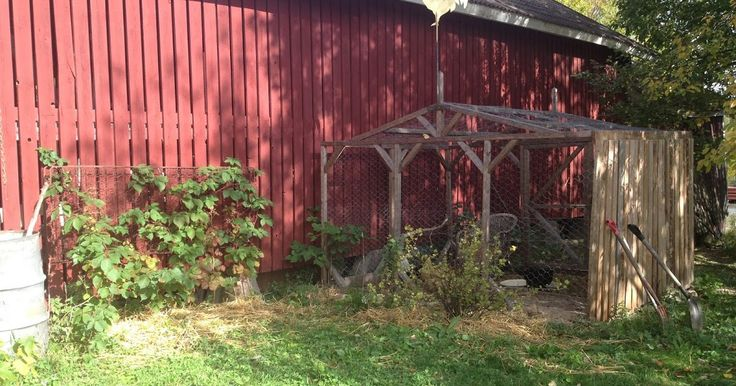 Tarkkasilmäinen näkee kanat nauttimassa viimeistä lämpimistä päivistä.     Näin kaunista meillä oli vielä eilen. Olin huijannut i...