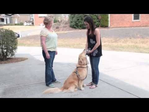 Fetch! Pet Care Pet Taxi Service in Roswell and East Cobb