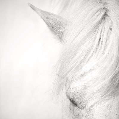 Sleeping - Camargue, France by Jonathan Chritchley