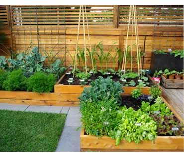 Terraced Gardening Tips for Beginners http://www.urbanhomez.com/decor/terraced_gardening_tips_for_beginners Find Top Interior Designers for your Home & Office in Pune at http://www.urbanhomez.com/suppliers/interior_designer/pune Find Top Interior Designers for your Home & Office in Noida at http://www.urbanhomez.com/suppliers/interior_designer/noida Find Top Interior Designers for your Home & Office in Chennai at http://www.urbanhomez.com/suppliers/interior_designer/chennai