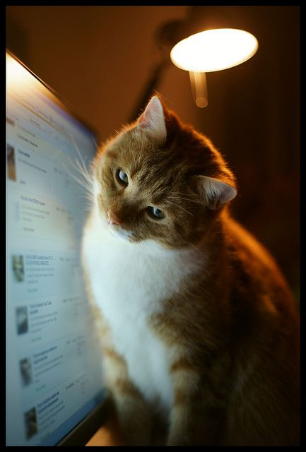 That doesn't look like pinterest. where is my cat board?