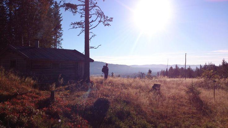 Hunting in Åmot and Stor-Elvdalen. Norway. https://www.inatur.no/jakt/520b22eee4b04f6448851b5d/smaviltjakt-pa-deset-i-amot-og-i-stor-elvdalen  | Inatur.no