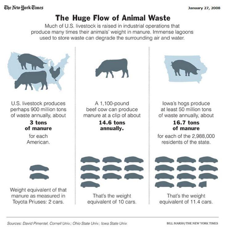 The Huge Flow of Animal Waste