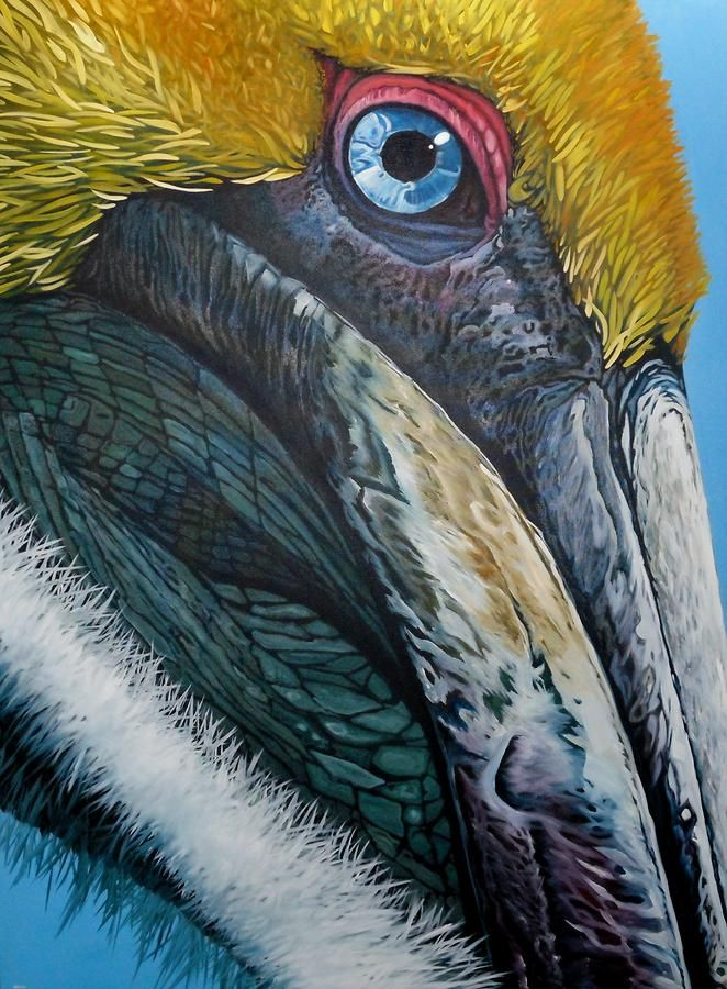 Pompous Pelican Painting  - Fine Art Print by Jon Ferrentino