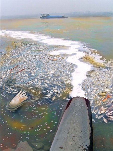 Water pollution in China is killing many animals that live in water.