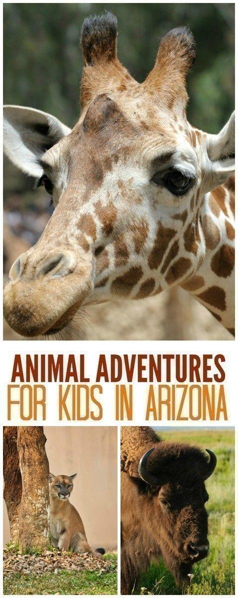 Animal Adventures for Kids in Arizona 90