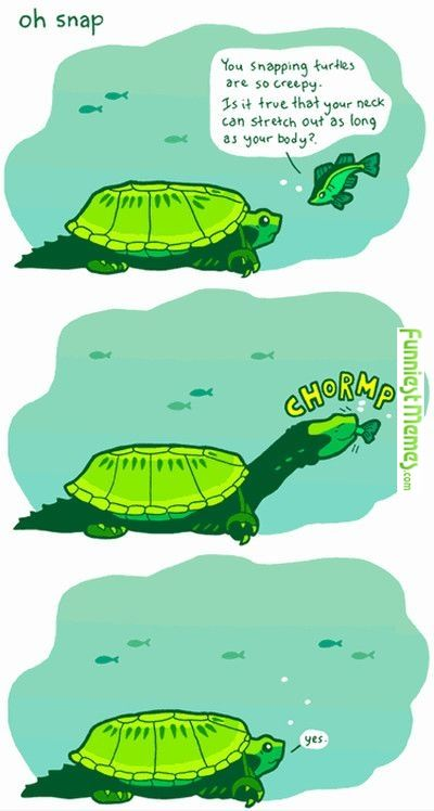 Funniest Memes - [You Snapping Turtles Are So Creepy...] Check more at http://www.funniestmemes.com/funniest-memes-you-snapping-turtles-are-so-creepy/