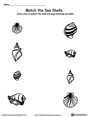 Match The Pair Of Sea Shells The Smalls Sea Shells And